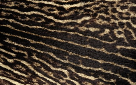 Real Leopard Fur Real