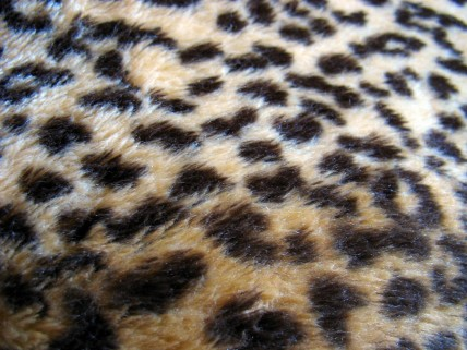 Wallpapers Hd Animal Print Leopard Real
